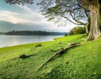Herboso a orillas del lago bajo árboles grandes Imagen de archivo libre de regalías