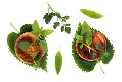 Herbs 002 Stock Image