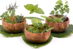 Herbs 012 Royalty Free Stock Image