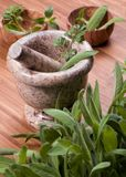 Herbs 015 Stock Image