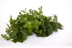 Herbs #1 Royalty Free Stock Photo