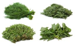 Herbs. stock photography