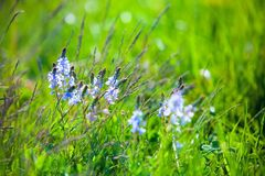 Herbs. And flowers in summer Royalty Free Stock Images