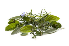 Herbs. Fresh-picked herbs, over white background.  Includes basil, mint, rosemary, sage, oregano and thyme Stock Photo