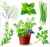 Herbs. Greens and herb pot. Vector Illustration stock illustration