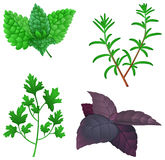 Herbs. Icon set with herbs: mint, rosemary, parsley and basil Stock Photography