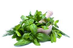 Herbs stock photos