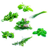 Herbs Royalty Free Stock Photo