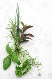 Herbs. Collection of fresh herbs on tablecloth Royalty Free Stock Photo