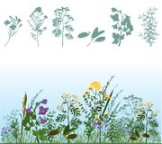Herbs. Silhouettes of herbs, herbs in meadow Royalty Free Stock Photography
