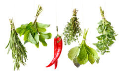 Herbs. royalty free stock photos