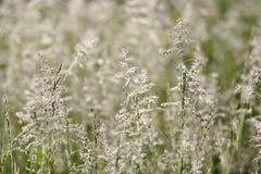Free Herbs. Royalty Free Stock Image - 24246676