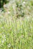 Herbs. Stock Photos