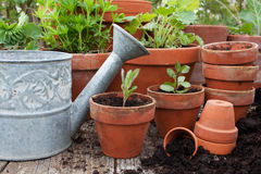 Herbs Royalty Free Stock Photo