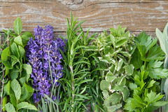 Herbs. Different herbs on wooden ground stock image