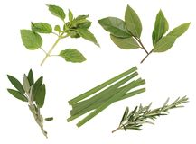Herbs 3. Royalty Free Stock Photo