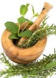 Herbs Stock Image