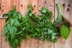 herbs fotos de stock royalty free