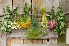 herbs fotografia de stock royalty free