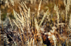 herbs Foto de Stock Royalty Free