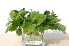 Herbs. Stock Image