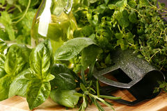Herbs. Very fresh herbs with olive royalty free stock image