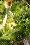 Herbs. Very fresh herbs with olive stock images