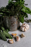 herbs fotografia de stock