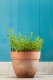 herbs imagem de stock royalty free