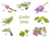 herbs imagens de stock