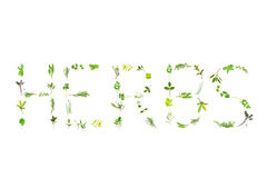 Herbs. Herb selection of leaf sprigs forming the word herbs, over white background. Lavender, bergamot, marjoram, rosemary, thyme, sage, basil, mint, hyssop royalty free stock image
