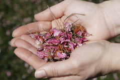 Herbs Stock Images