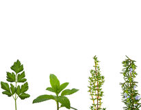 Herbs. Different kinds of herbs with copy space Stock Photo
