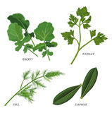 Herbs. Clip-arts of various herbs Royalty Free Stock Images