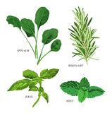Herbs. Clip-arts of various herbs stock illustration