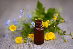 Herbs and aromatherapy oils in in glass bottle Stock Image