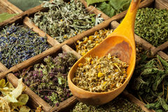 Herbs. Assorted organic dried medical herbs royalty free stock image