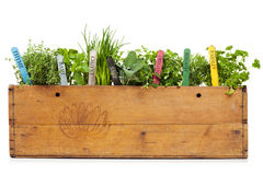 Herbs assortment in vintage banana box Royalty Free Stock Image