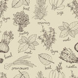 Herbs background Royalty Free Stock Image