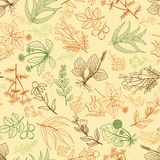 Herbs background in hand drawn style Stock Photo
