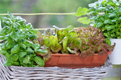 Herbs on the balkony Royalty Free Stock Photography