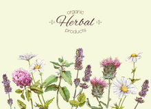 herbs banner Royalty Free Stock Photos