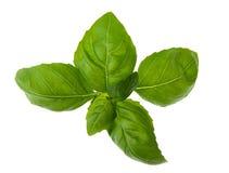 Herbs :basil Royalty Free Stock Image