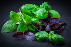 Herbs - basil Stock Photos