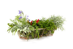 Herbs In A Basket Stock Photos