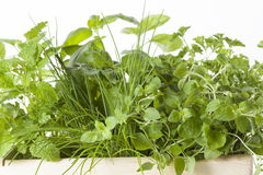 Herbs in a basket Royalty Free Stock Images