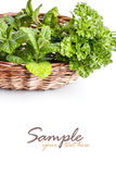 Herbs in basket Stock Images