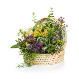 Herbs in Bloom Stock Images