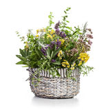 Herbs in Bloom Royalty Free Stock Images