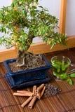 Herbs and bonsai stock photo